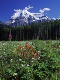Mount Robson, 3954 M, Highest Peak in Canadian Rockies, British Columbia, Canada. Photographic Print by Chris Cheadle