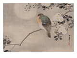 Japanese watercolor of bird perched on a branch of a blossoming tree Impression giclée