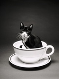 Kitten in a Teacup Photographic Print by Robert Essel