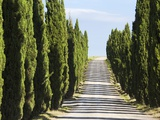 Cypress trees lining a dirt road Photographic Print by Frank Lukasseck