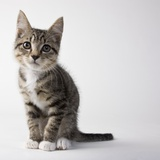Tabby kitten Photographic Print by Michael Kloth