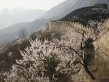 Cherry blossoms along the Mutianyu section of the Great Wall Fotoprint van Guo Jian She