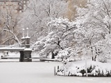 Snow covered trees with a footbridge in a public park, Boston Public Garden, Boston, Massachusetts, Photographic Print by Mark Hunt