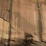 Lone Tree Beneath a Sheer Cliff Face Photographic Print by Micha Pawlitzki
