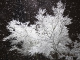 Freshly Falling Snow and an Illuminated Tree Photographie par David Buffington