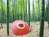 Coarse Oilpaper Umbrella in Bamboo Forest, Muko City, Kyoto Prefecture, Japan Photographic Print