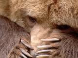 Sad Grizzly Bear Lámina fotográfica por Terry Eggers
