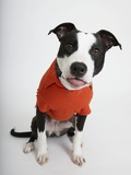 Quirky Dog in a Shirt Photographic Print by Michael Kloth
