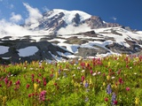 Field of wildflowers and Mount Rainier Photographic Print by Craig Tuttle