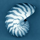Nautilus Shell Photographic Print by John Kuss