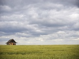 Barley Field and Abandoned Farmhouse, Raymore, Saskatchewan, Canada Photographic Print by Roy Ooms