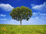 Tree Against Blue Sky Photographic Print by Lew Robertson