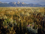 Grand Teton National Park Photographic Print by Scott Smith