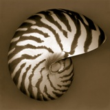 Nautilus Shell Fotografisk tryk af John Kuss
