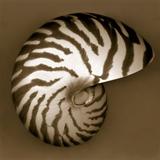 John Kuss - Nautilus Shell Fotografická reprodukce