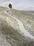 Snowy ranch road and lone tree in Inyo National Forest Photographic Print by John Eastcott & Yva Momatiuk