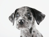 Puppy Looking Up Photographic Print by Michael Kloth