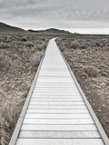 Boardwalk through the desert Photographic Print by David Madison