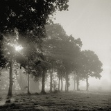 Sun shining through morning mist Photographic Print by Kurt Stier