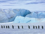Emperor penguin group with iceberg Photographic Print by Frank Krahmer