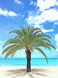 Palm tree on tropical beach Photographic Print by Alfred Saerchinger