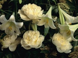 Easter Lilies and White Peonies Photographic Print by Clay Perry