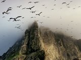 Cloud covers a sea bird rookery high on a sea stack cliff Fotografiskt tryck av Jim Richardson