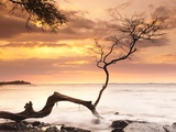 Tree on Anaehoomalu Beach Photographic Print by Frank Lukasseck
