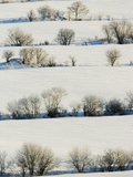 Snowy Landscape Photographic Print by Jeremy Woodhouse