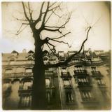 Urban Paris Landscape with Tree Papier Photo par Kevin Cruff
