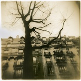 Urban Paris Landscape with Tree Photographic Print by Kevin Cruff