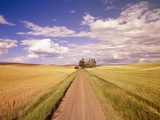 Dirt Road Stretching Through Fields Photographic Print by Craig Tuttle