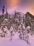 Snow Covered Trees at Lake Louise, Banff National Park, Alberta Canada Photographie par Darwin Wiggett