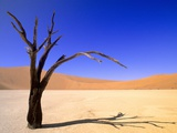 Dead Vlei, Soussusvlei, Namibia, Africa Photographic Print by Wayne Lynch