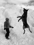 Dog Catching a Snowball Photographic Print by Karl Weatherly