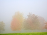 Fall trees shrouded in mist Photographic Print by Craig Tuttle