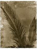 Palme de sagou Reproduction photographique par John Kuss