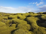Moss landscape over lava field Photographic Print by Frank Krahmer