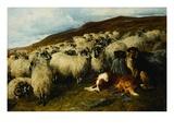 Weary But Watchful Impression giclée par John Sargent Noble