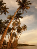 Coconut Grove, Molokai, Hawaii Photographic Print by Douglas Peebles