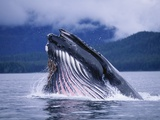 Humpback Whale Feeding in Frederick Sound in Alaska Photographic Print by Paul Souders