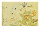 Illustration from A Picture Book of Selected Insects Giclee Print by  Utamaro