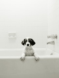 Puppy in a Bathtub Fotografie-Druck