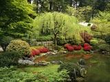 Japanese Garden Pond Fotografie-Druck von Craig Tuttle