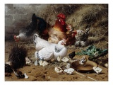 A Family of Chickens Giclee Print by Eugene Remy Maes