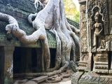 Tree roots overtaking Ta Prohm at Angkor Photographic Print by José Fuste Raga