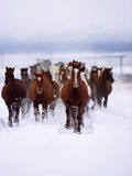 Herd of Horses Running Photographic Print by David Stoecklein