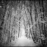 Forest in winter Photographic Print by George Disario
