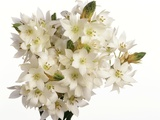 Bouquet of white flowers Photographic Print
