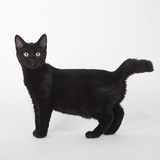 Black Cat Photographic Print by Michael Kloth